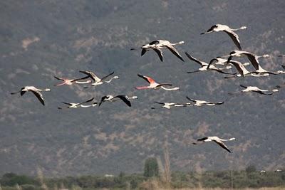 Flamingo's-Kalloni3-Saltpan