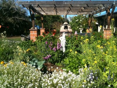 This is a view looking East to one garden bed that is overflowing with abundance & bees.