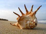 shell-on-the-beach-194749-m