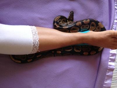 Mani snake 6