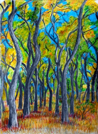 A Tangle of Cottonwoods, drawing by Judith Shaw
