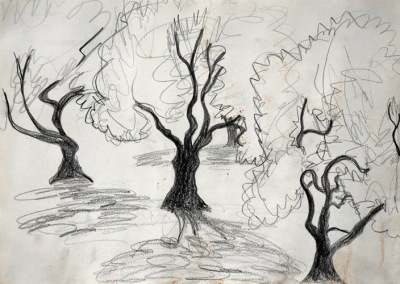 Three Olive Trees, drawing by Judith Shaw