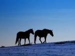 istock snow horses