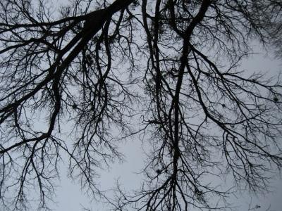 bare-tree1