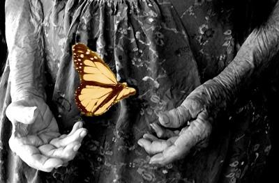 Florence's Hands by Lauren Raine