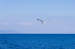 seagull-flying-over-aegean-sea-greek-sea