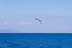 seagull-flying-over-aegean-sea-greek-sea