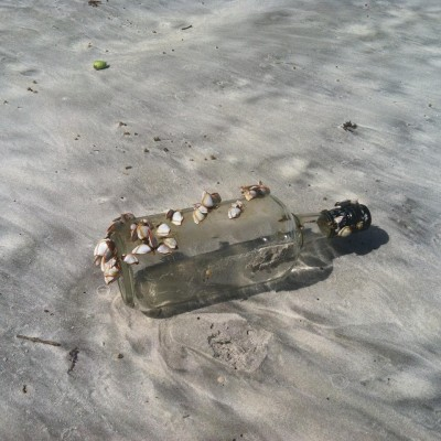 What I found wandering on a beach in Florida.