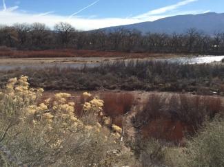 Rio Grande north of ABQ