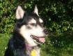 ivy's dog 2