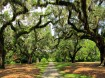 Live Oak Allée at Brookgreen Gardens
