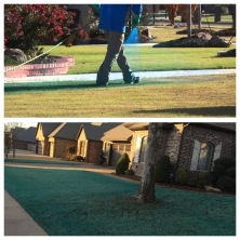 blue lawn