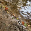 Leaves line the edge where river water meets the land