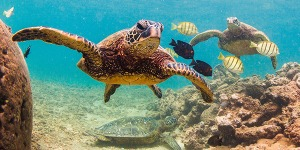 Turtle Slow And Steady Wins The Race By Judith Shaw