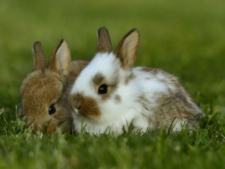 Pictures of two rabbits